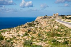 Dingli cliffs on Malta island. High Dingli cliffs on Malta island. Beautiful landscape in south Europe Stock Images