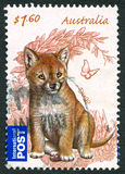 Dingo Australische Postzegel Royalty-vrije Stock Fotografie