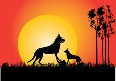 Dingo no por do sol Foto de Stock Royalty Free
