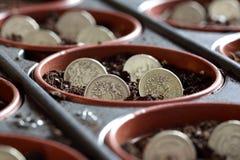 Dinheiro crescente imagem de stock royalty free