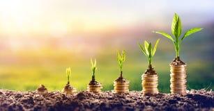 Dinheiro crescente - planta em moedas fotografia de stock royalty free