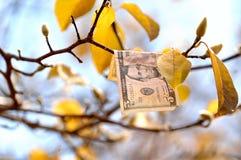 Dinheiro da queda que adere-se ao ramo de árvore fotografia de stock royalty free