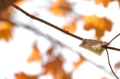 Dinheiro da queda que adere-se de um ramo de árvore com folhas de bordo alaranjadas fotografia de stock