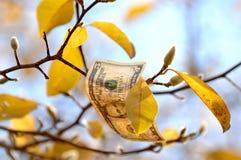 Dinheiro da queda que cai de um ramo de árvore fotografia de stock royalty free