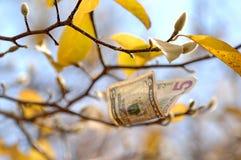 Dinheiro da queda que cai de um ramo de árvore através do ar fotos de stock royalty free