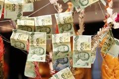 Dinheiro de Sticked na árvore do mérito Foco seletivo Fotos de Stock Royalty Free