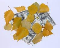 Dinheiro e folhas Fotos de Stock Royalty Free