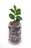 Dinheiro e planta Fotografia de Stock