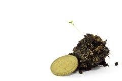 Dinheiro e planta. Foto de Stock
