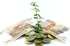 Dinheiro e planta Fotos de Stock