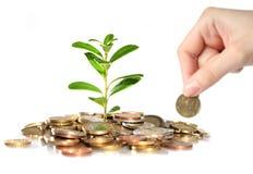 Dinheiro e planta. Imagem de Stock