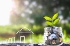 Dinheiro e planta crescentes, conceito de salvamento do dinheiro, conceito das economias financeiras para comprar uma casa Fotografia de Stock Royalty Free