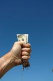 Dinheiro e raiz 2 Foto de Stock