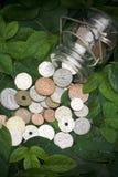 Dinheiro fresco Imagem de Stock Royalty Free