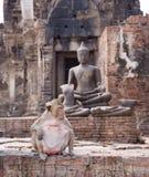 Dinheiro que senta-se no assoalho com buddha idoso atrás, Tailândia Imagens de Stock Royalty Free