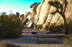 Dining table in the nature of Joshua Tree Natonal Park Royalty Free Stock Image