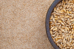 Dinkel wheat Royalty Free Stock Photos