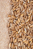 Dinkel wheat Royalty Free Stock Images
