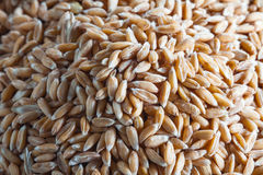Dinkel wheat heap Stock Image