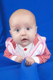 Dinky girl. Royalty Free Stock Image