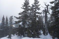 Dinky Spitze im Nebel auf Mt Seymour, BC stockbild