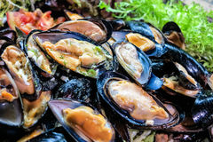 Dinner buffet – Delicious fresh mussels Stock Photos