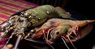 Dinner from prawns Royalty Free Stock Images