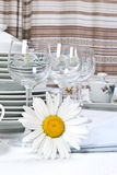 Dinner set and camomile. Close-up Royalty Free Stock Photo