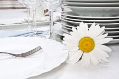 Dinner set with camomile. Close-up Stock Images