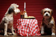 Dinner for two Stock Photography