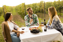 Dinner in the vineyard royalty free stock photo