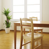 Dinning room. Table, chairs and plant in dinning room Stock Photos