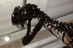 Dino. Saur coming right at you stock image