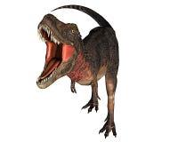 dino dinosaurrex Arkivfoton