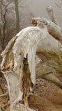 dino drzewo Obrazy Royalty Free