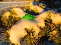 Dino en un árbol de abeto nevoso del invierno Fotos de archivo