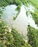 Dino footprint - like in flooded field royalty free stock photography