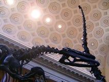 Dino-Fossil Stockbilder