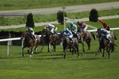 Dino gioca la corsa nella corsa di cavalli Immagine Stock Libera da Diritti