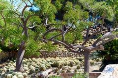 Dino Park av Algar Arkivfoto
