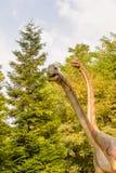 Dino Park Slovakien Arkivbild