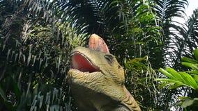 Dino, Singapore stock footage