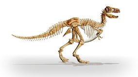 Dino T-Rex walking,loop, stock footage. Video stock footage