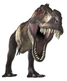Dinos-TRex - 001 Royalty Free Stock Photo