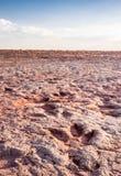 Dinosaurów ślada w Arizona pustyni Zdjęcie Stock