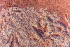 Dinosaurów odciski stopy Fotografia Royalty Free