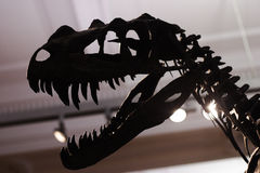 Dinosaur. Coming right at you stock photography