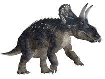 Dinosaur 2. 3D render of a dinosaur with horns Royalty Free Stock Images