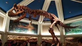 dinosaur Photographie stock