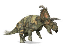 Dinosaur Albertaceratops Royalty Free Stock Photos